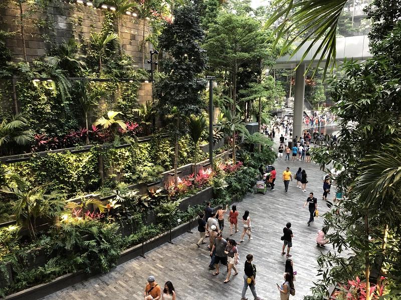 +singapore+forest+valley+pedestrian